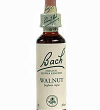 Walnut Flores de Bach es un remedio floral indicado para aquellos que encuentran difícil adaptarse a los cambios o quienes son hipersensibles ante ciertas ideas, entornos o influencias.